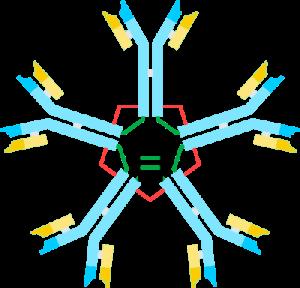 प्रतिरक्षी (एंटीबॉडी) - संरचना एवं कार्य (Structure and Functions of Antibody hindi )
