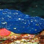 Phylum-Porifera or Sponge Hindi