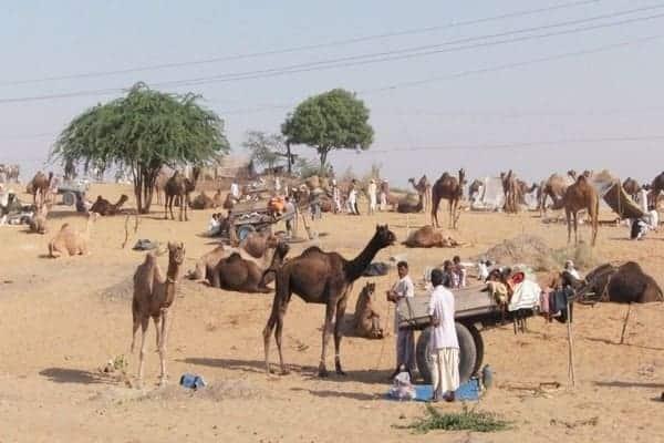 राजस्थान के प्रमुख मेले (Rajasthan Ke Mele)