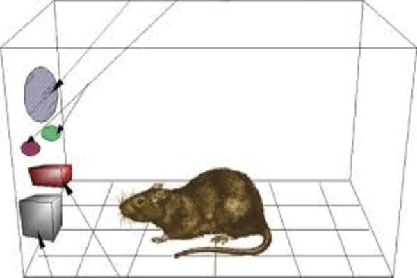 अधिगम का क्रिया-प्रसूत सिद्धांत ( Operant Conditioning Theory of Learning)