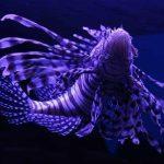 महावर्ग पिसीज, Superclass Pisces, मछलियों का समूह, मछलियों के प्रकार, Fish Index