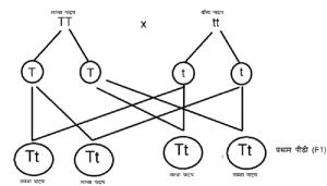 आनुवंशिकी एवं मेंडल के आनुवंशिकी के नियम