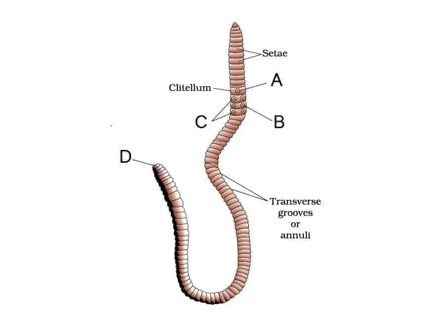 Earthworm mcq hindi