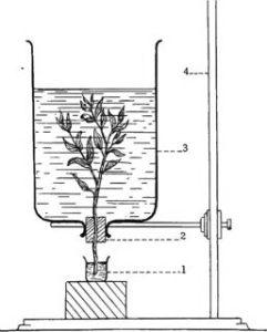 पादपो में रसारोहण ascent of sap in plants in hindi 1