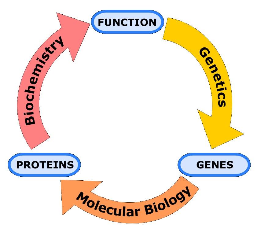 genetics in hindi, जेनेटिक्स नोट्स इन हिंदी, definition of heredity in hindi, आनुवंशिकता क्या है?, आनुवंशिकता की परिभाषा, mechanism of heredity in hindi, जेनेटिक्स क्या है? आनुवंशिकी,